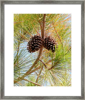 Pinecone's Framed Print
