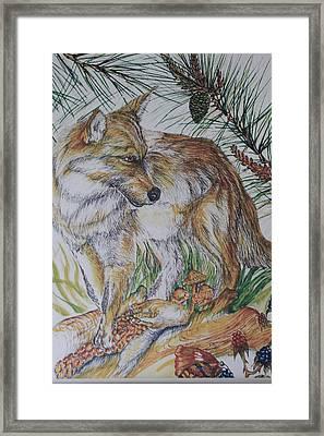 Pinelands Framed Print