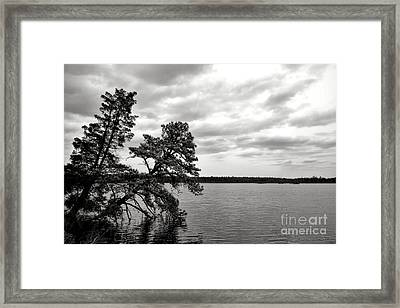 Pinelands Memories Framed Print by Olivier Le Queinec