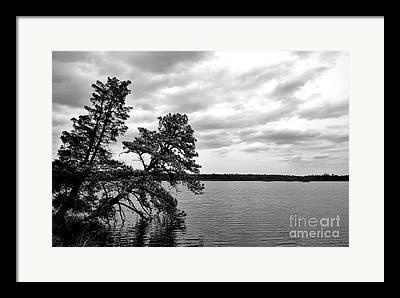 New Jersey Pine Barrens Framed Prints