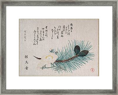 Pines And Cherry Blossoms Framed Print