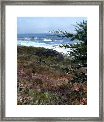 Pines At The Ocean Framed Print by Elaine Plesser