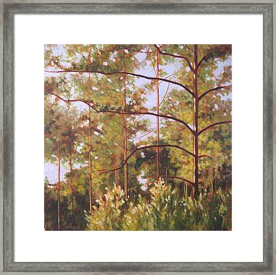 Pines Framed Print by Carlynne Hershberger