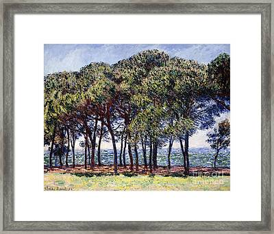 Pines Framed Print by Claude Monet