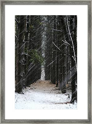 Pines In Snow Framed Print