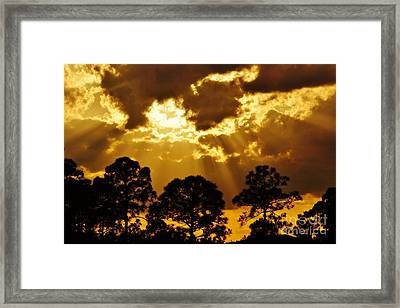 Pinetree Sunset Framed Print by Lynda Dawson-Youngclaus