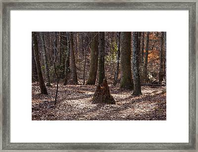 Pinetrees 1 Framed Print