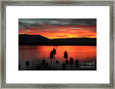 Pineview Dawn Framed Print