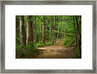 Pinewood Path Framed Print