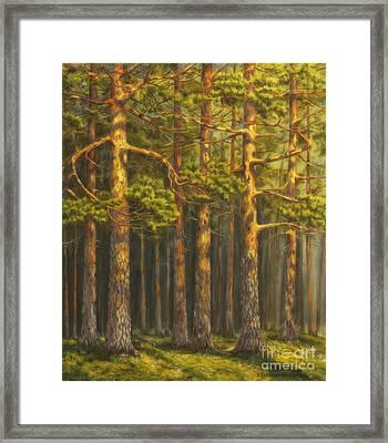 Pinewood Framed Print