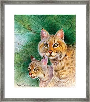 Pinewoods Bobcat Framed Print by Tracy Herrmann