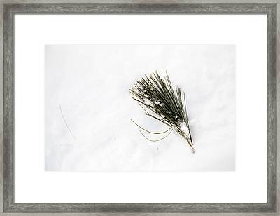 Pining Framed Print by Courtney Webster