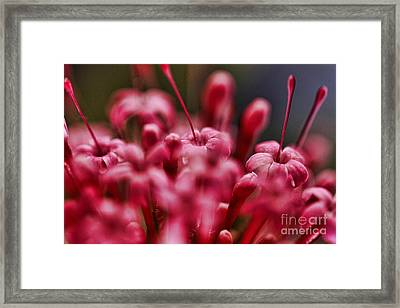 Pink Alium Framed Print by Rebeka Dove