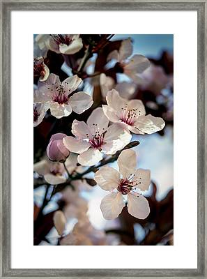 Pink And Blue Framed Print by Caitlyn  Grasso