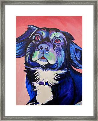 Pink And Blue Dog Framed Print by Joshua Morton