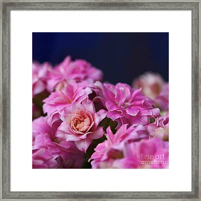 Pink And Blue II Framed Print by Pamela Gail Torres