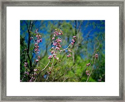 Pink And Blue Framed Print by Linda Unger