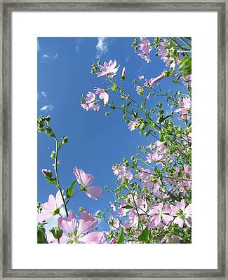 Pink And Blue Framed Print by Natalia Levis-Fox