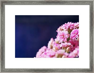Pink And Blue Framed Print by Pamela Gail Torres