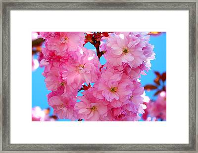 Pink And Blue Framed Print by Richard Hinger