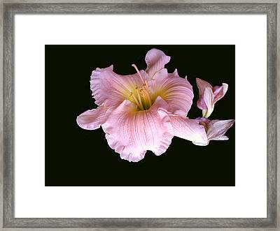 Pink And Close Framed Print