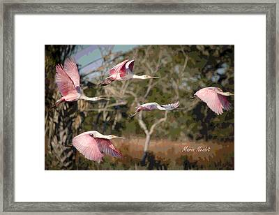 Pink And Feathers Framed Print