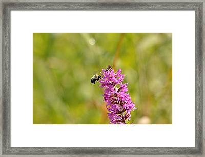 Pink And Gold Framed Print by David Porteus