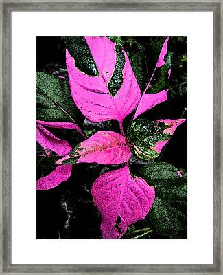 Pink And Green Framed Print by Aimee L Maher Photography and Art Visit ALMGallerydotcom