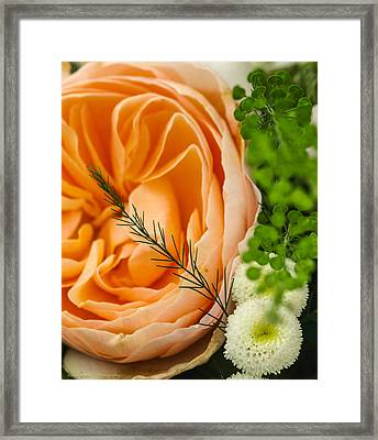 Framed Print featuring the photograph Pink And Green by Ross Henton