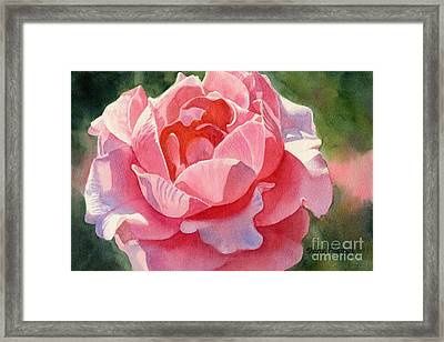 Pink And Orange Rose Blossom Framed Print