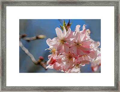 Pink And Pretty Framed Print by Robert Hebert