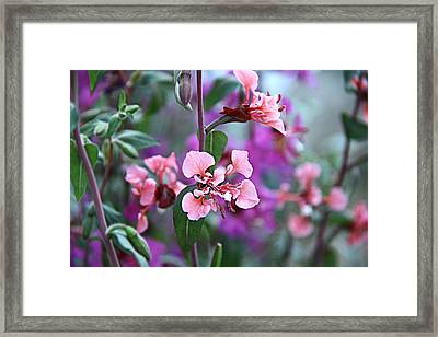 Pink And Purple Framed Print by Arkamitra Roy