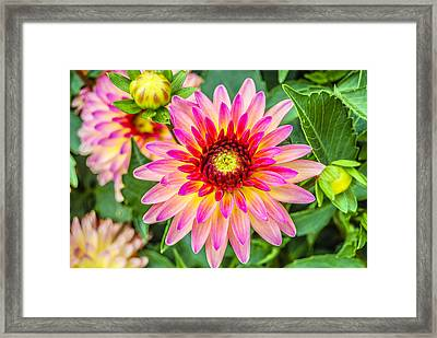 Pink And Purple Blooms Framed Print