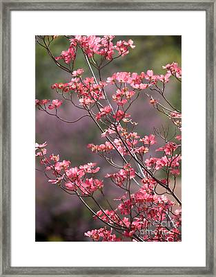 Pink And Purple Spring Trees Framed Print