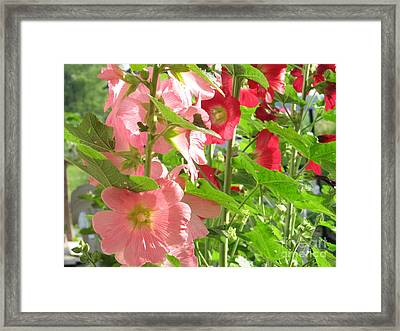 Pink And Red Group Framed Print