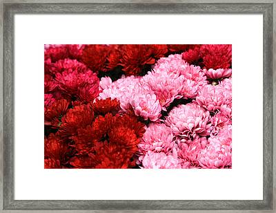 Pink And Red Framed Print by Menachem Ganon