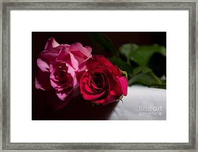 Framed Print featuring the photograph Pink And Red Rose by Matt Malloy