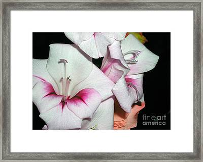 Pink And White Beauties Framed Print