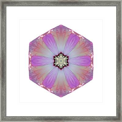 Pink And White Hibiscus Moscheutos I Flower Mandala White Framed Print