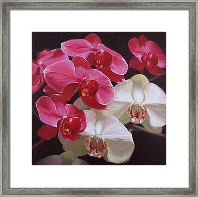 Pink And White Orchids Framed Print by Takayuki Harada