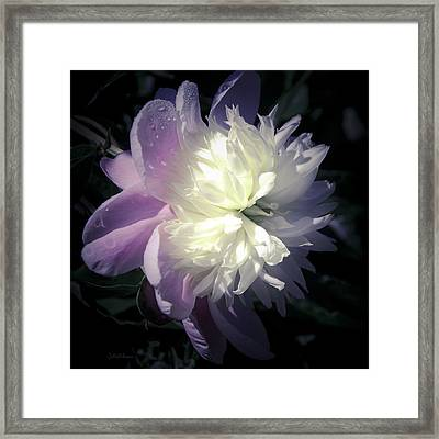 Pink And White Peony Petals Framed Print