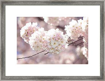 Pink And White Pompoms Of Light Framed Print by Lisa Knechtel
