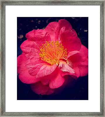 Pink And Yellow Flower Framed Print