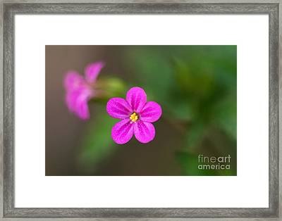 Pink And Yellow Flowers With Green Blurry Background Framed Print