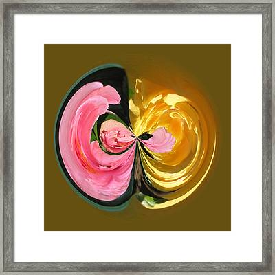 Pink And Yellow Hibiscus 801 Framed Print