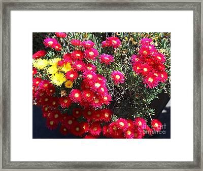 Pink And Yellow Wildflowers Framed Print