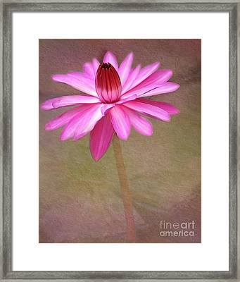 Pink Arabesque Framed Print