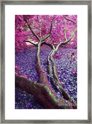 Pink Autumn Framed Print by Sally Barnett