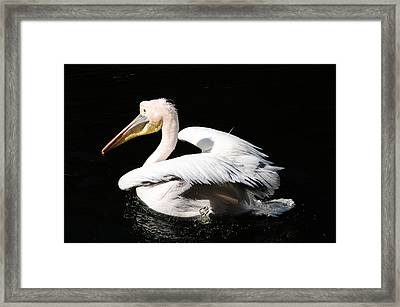 Pink Backed Pelican Framed Print by Bonnie Fink