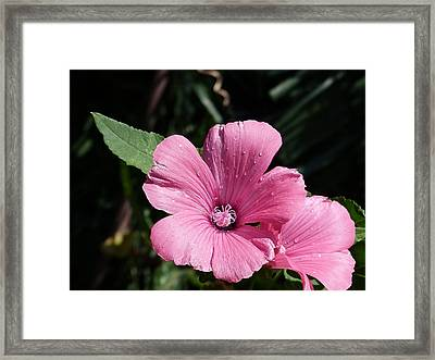 Framed Print featuring the painting Pink Beauty by Janina  Suuronen
